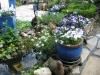 Mijn tuin 11