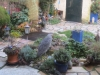 Mijn tuin 25